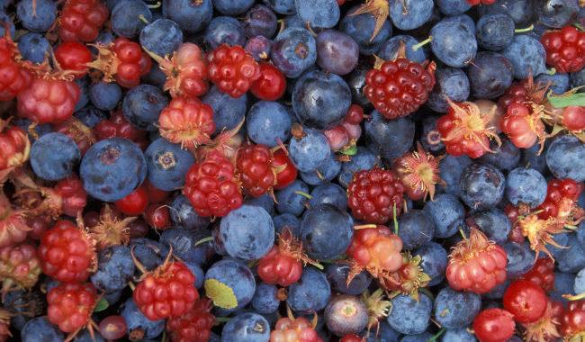 Желе из диких ягод рецепт приготовления