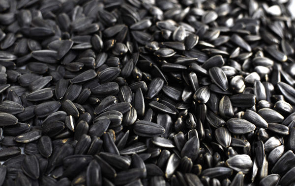 Калорийность семечек на 100 грамм
