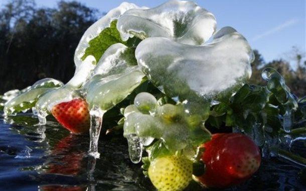 Подготовка свежих фруктов к замораживанию