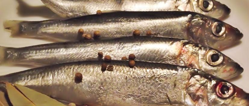 Пряная салака рецепт приготовления
