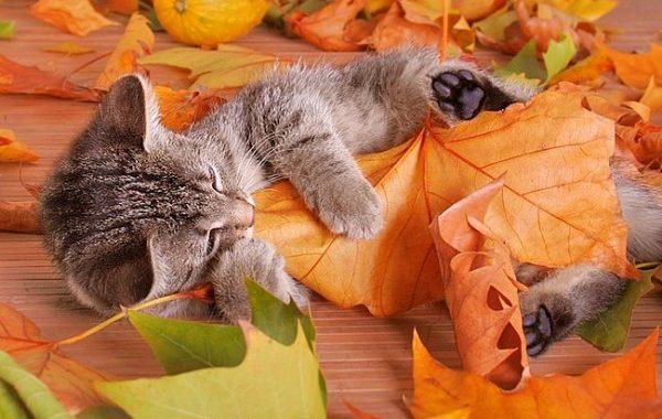 Несколько простых советов, как держать себя в форме осенью